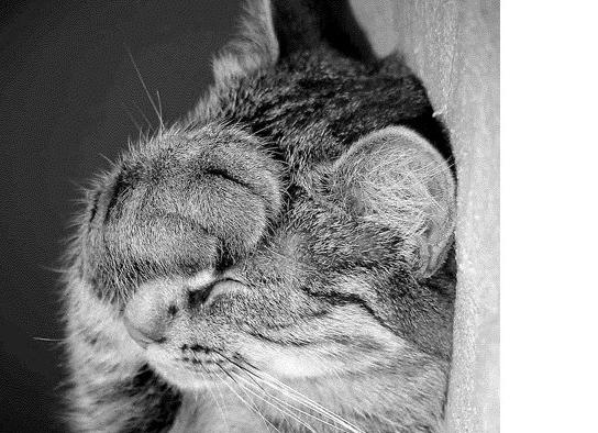 Жидкий стул у котят: причины и лечение
