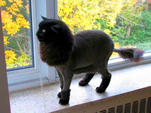 кот после стрижки