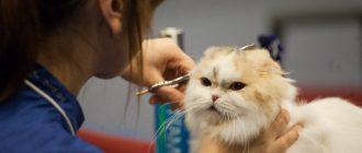 фото стрижка кошек