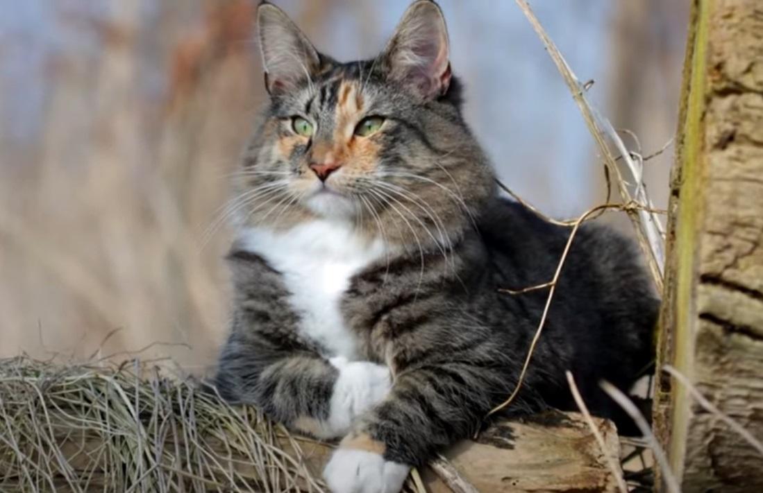 Интересные факты о кошачьих усах