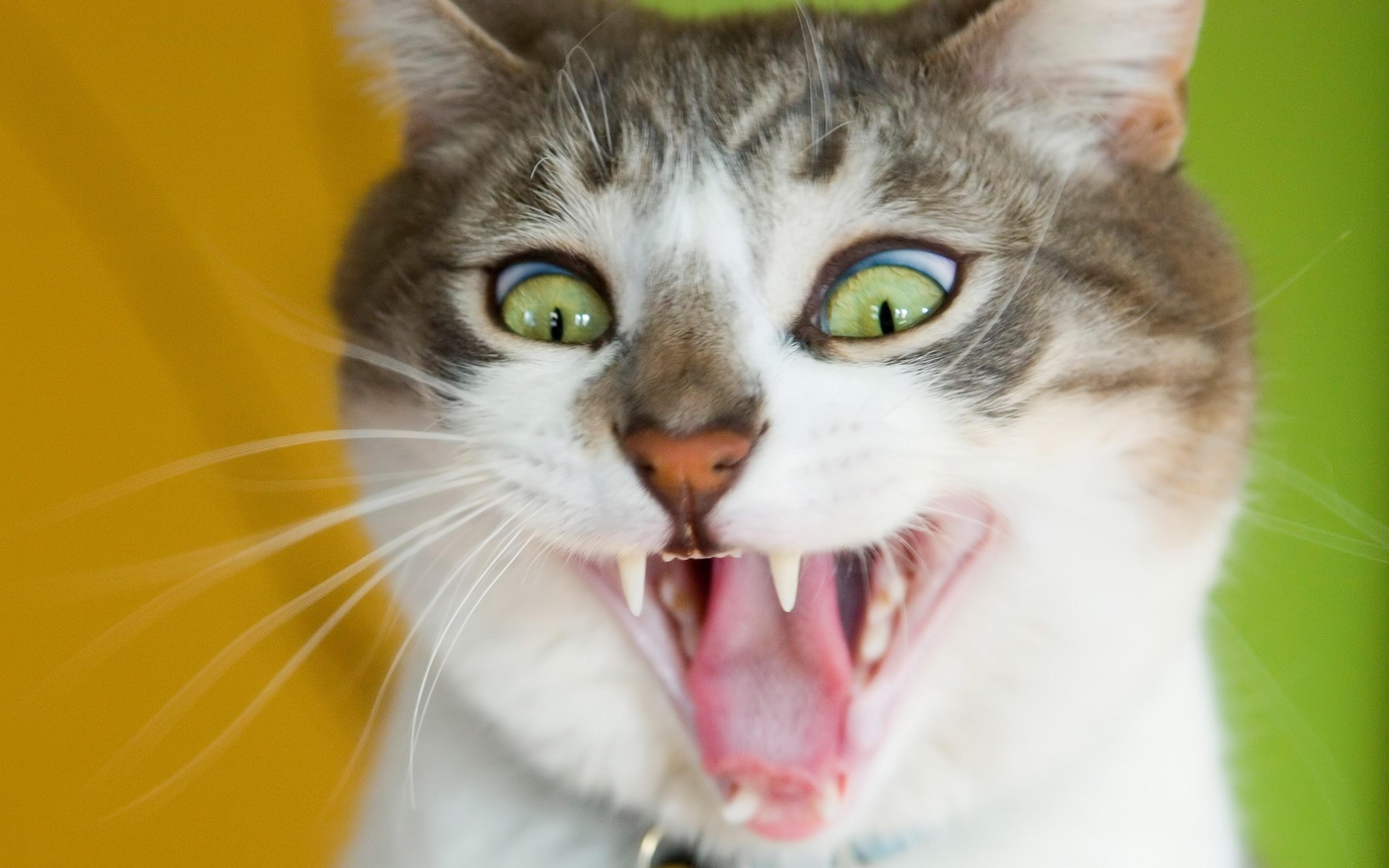 Удивленные котенки  № 1097892 без смс